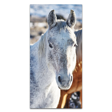 White Horse // Front Face