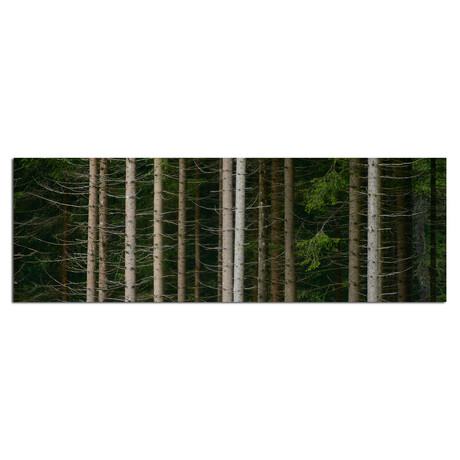 """Forest (48""""W x 16""""H x 0.5""""D)"""