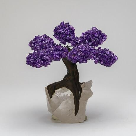 The Harmony Tree // Amethyst Clustered Gemstone Tree on Clear Quartz Crystal Matrix // Medium