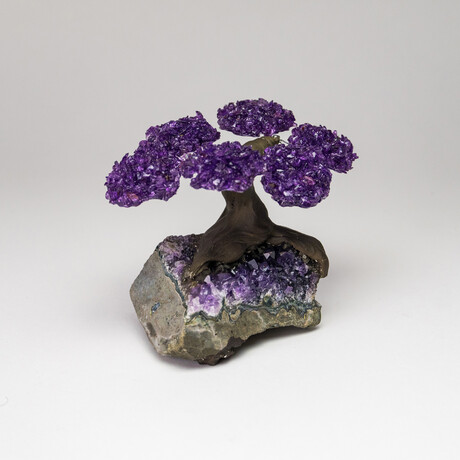 The Protection Tree // Amethyst Clustered Gemstone Tree on Amethyst Matrix // Small