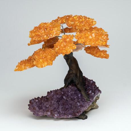 The Empowerment Tree // Amethyst Clustered Gemstone Tree on Citrine Matrix // Large