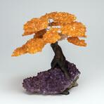 The Money Tree // Citrine Clustered Gemstone Tree on Amethyst Matrix // Large