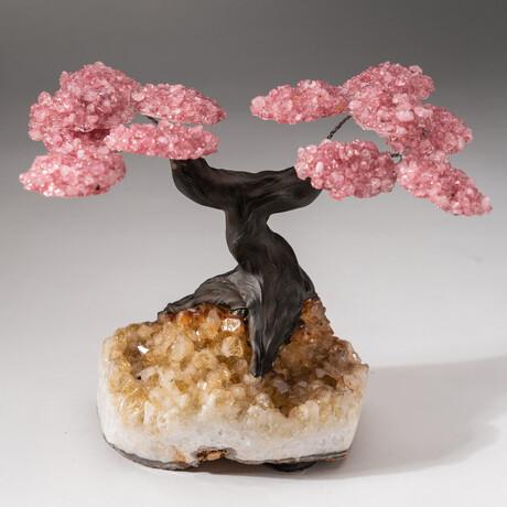 The Comfort Tree // Custom Rose Quartz Clustered Gemstone Tree on Citrine Matrix // V1