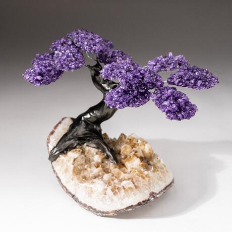 The Protection Tree // Custom Amethyst Clustered Gemstone Tree on Amethyst Matrix // V4