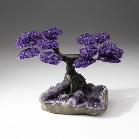 The Protection Tree // Custom Amethyst Clustered Gemstone Tree on Amethyst Matrix // V5