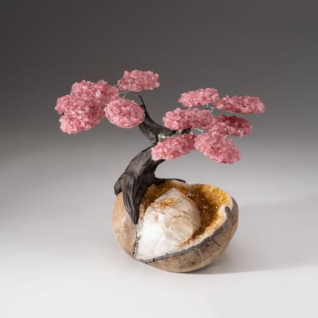 The Comfort Tree // Custom Rose Quartz Clustered Gemstone Tree on Citrine Matrix with Giant Calcite Crystal