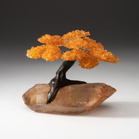The Joyful Tree // Citrine Clustered Gemstone Tree on Extra Large Clear Quartz Crystal Matrix
