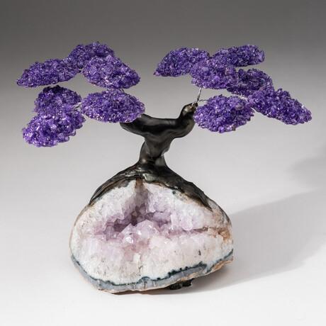 The Protection Tree // Custom Amethyst Clustered Gemstone Tree on Amethyst Matrix // V7