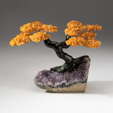 The Money Tree // Custom Citrine Clustered Gemstone Tree on Amethyst Matrix // V1