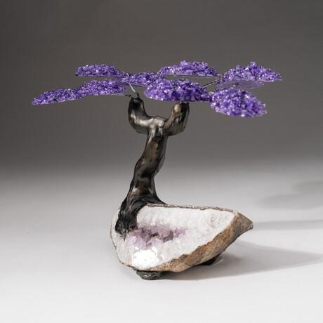 The Protection Tree // Custom Amethyst Clustered Gemstone Tree on Amethyst Matrix // V6