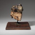 Genuine Natural Mastodon Tooth + Custom Wooden Display Stand // V1