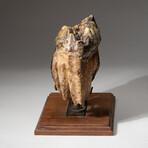 Genuine Natural Mastodon Tooth + Custom Wooden Display Stand // V2