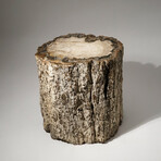 Genuine Natural Petrified Wood Log