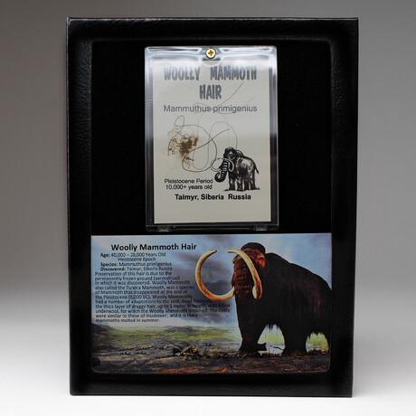 Genuine Woolly Mammoth Hair + Display Box