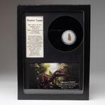 Genuine Raptor Dinosaur Tooth + Display Box