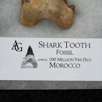 Genuine Pre-Historic Shark Tooth in Display Box