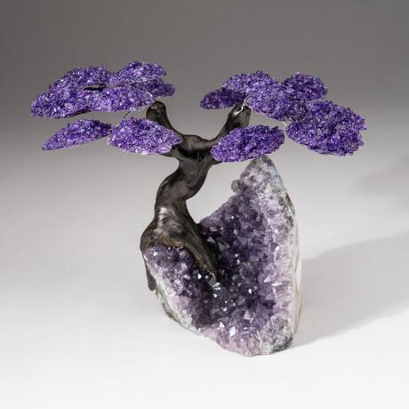 The Protection Tree // Genuine Custom Amethyst Clustered Gemstone Tree on Amethyst Matrix // V1