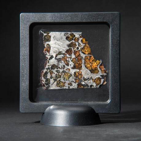 Genuine Seymchan Pallasite Meteorite Slice + Acrylic Display Stand // 29 g