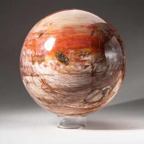 Giant Petrified Wood Sphere + Acrylic Display Stand
