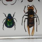 12 Genuine Bugs in Lucite