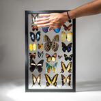 22 Genuine Butterflies + Display Frame // V2