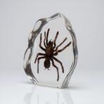 Genuine Tarantula in Lucite Freeform