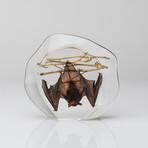 Genuine Medium Hanging Bat in Lucite