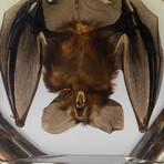 Genuine Large Hanging Bat in Lucite