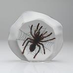 Genuine Tarantula with Web in Lucite