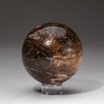 Genuine Polished Brown Petrified Wood Sphere + Acrylic Display Stand