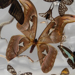 15 Genuine Butterflies in Acrylic Freeform