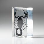 Genuine Single Small Black Scorpion