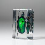 Genuine Single Iridescent Beetle in Lucite