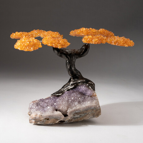 The Money Tree // Custom Genuine Citrine Clustered Gemstone Tree on Amethyst Matrix // V2