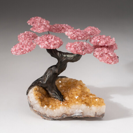 The Comfort Tree // Genuine Custom Rose Quartz Clustered Gemstone Tree on Citrine Matrix // V3