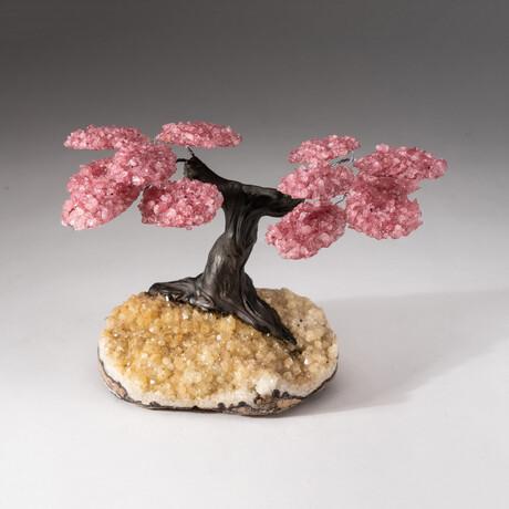 The Comfort Tree // Genuine Custom Rose Quartz Clustered Gemstone Tree on Citrine Matrix // V1