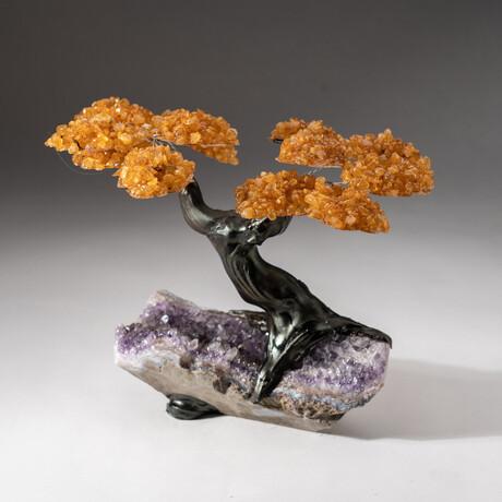 The Money Tree // Custom Genuine Citrine Clustered Gemstone Tree on Amethyst Matrix // V3