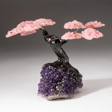 The Love Tree // Genuine Custom Rose Quartz Clustered Gemstone Tree on Amethyst Matrix // V2