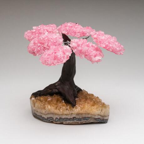 The Comfort Tree // Genuine Rose Quartz Clustered Gemstone Tree on Citrine Matrix // Medium