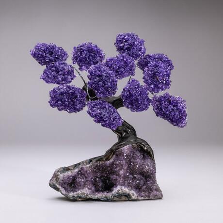 The Protection Tree // Genuine Custom Amethyst Clustered Gemstone Tree on Amethyst Matrix // V7