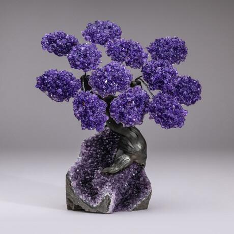The Protection Tree // Genuine Custom Amethyst Clustered Gemstone Tree on Amethyst Matrix // V8