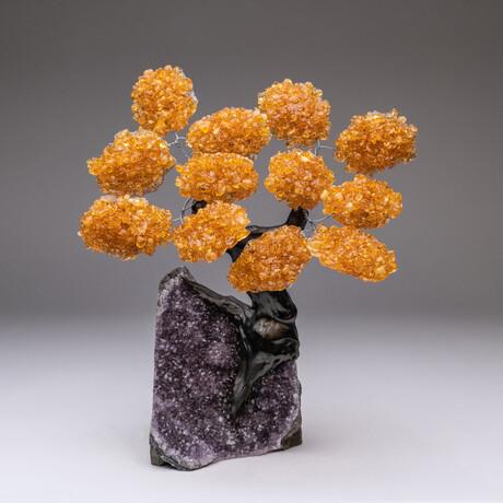 The Money Tree // Genuine Custom Citrine Clustered Gemstone Tree on Amethyst Matrix // V2