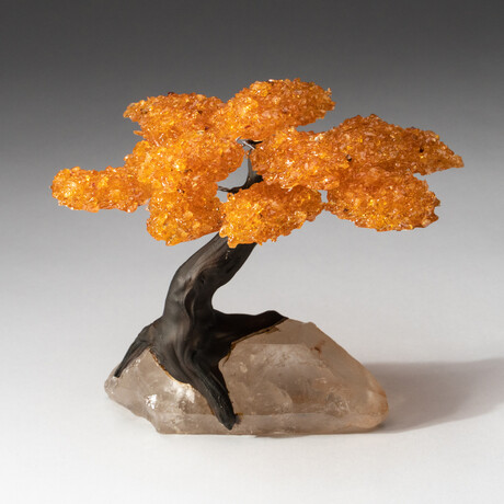 The Joyful Tree // Genuine Citrine Clustered Gemstone Tree on Clear Quartz Crystal Matrix // Large