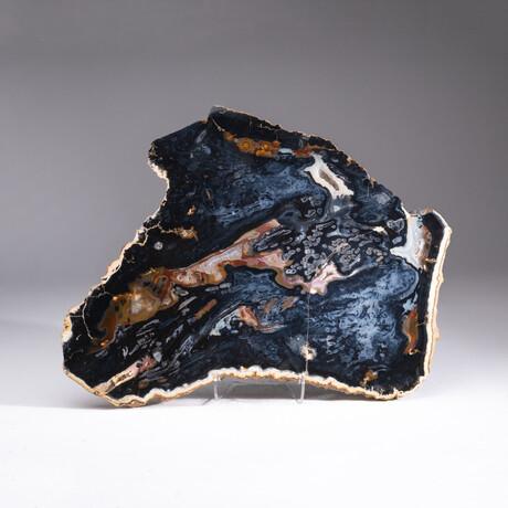 Genuine Polished Black Banded Agate Slice + Acrylic Display Stand
