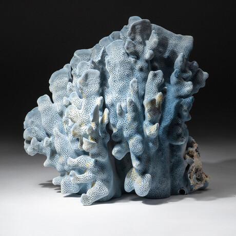 Genuine Blue Ridge Coral // V2