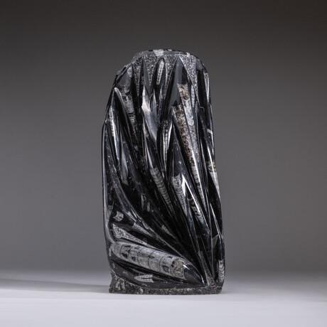 Genuine Orthoceras Fossil Statue