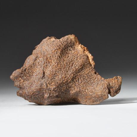 Genuine Natural Gebel Kamil Meteorite + Display Box // 108.5 g