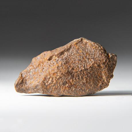 Genuine Natural Gebel Kamil Meteorite + Display Box // 49.6 g