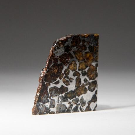 Genuine Seymchan Pallasite Meteorite Slice + Display Box // 23 g // V2