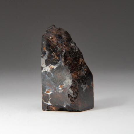 Genuine Seymchan Pallasite Meteorite Slice + Display Box // 75.2 g